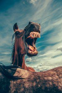 cheval-rire